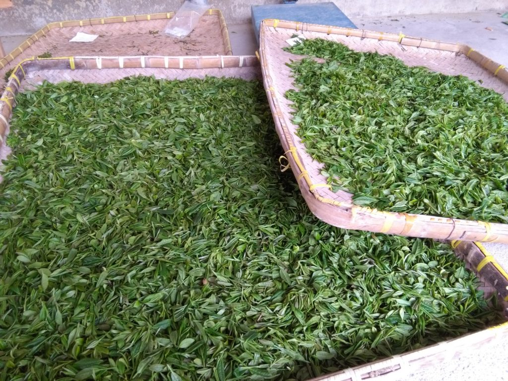 drying tea leaves in Anji